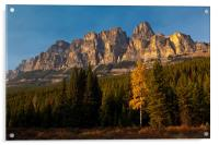 Bow Valley Parkway, Acrylic Print