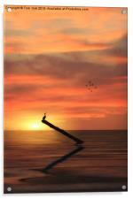 CORMORANT IN THE SUNSET, Acrylic Print