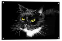 Domestic Black and White cat canvas print, Acrylic Print