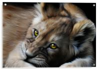 Little Cub, Acrylic Print