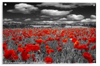 Crimson Poppies, Acrylic Print