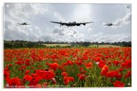 Poppy Fly Past, Acrylic Print