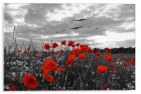 Warbirds Remembrance - Selective , Acrylic Print