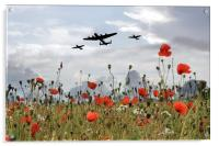 BBMF Over The Poppies, Acrylic Print