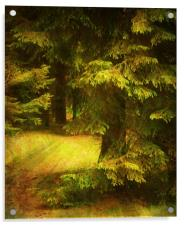 Heart of the Forest., Acrylic Print