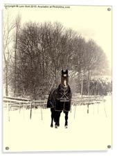 Horse in the Snow, Acrylic Print