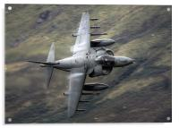 Harrier through the gap, Acrylic Print