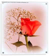 A Rose for Love , Acrylic Print