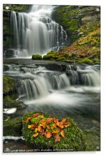 Scalebar Force, Settle, Acrylic Print