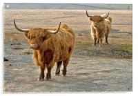 Beautiful Highlanders, Acrylic Print