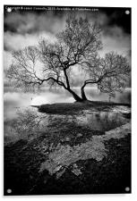 The Old Tree Ullswater, Acrylic Print
