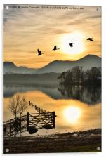 Geese In The Golden Hour., Acrylic Print