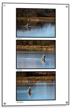 Fly Fishing Triptych White Background, Acrylic Print