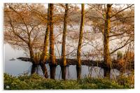 Trees in the Shallows, Acrylic Print