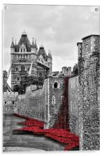 Memorial Poppies at the Tower. , Acrylic Print