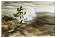 River Tree, Acrylic Print