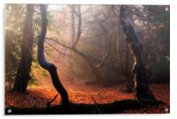 Autumn in Epping Forest, Acrylic Print