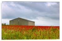 Red Poppies and a Barn, Acrylic Print