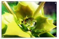 Mahonia after the Rain, Acrylic Print