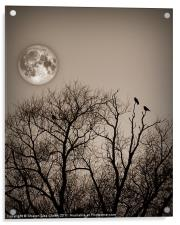 Evening roost, Acrylic Print