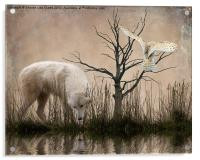 Woodland Wolf reflected, Acrylic Print