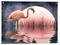 Flamingo Moon, Acrylic Print