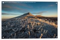 Frosted Grass in the Beacons, Acrylic Print