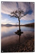Lone tree in water, Acrylic Print