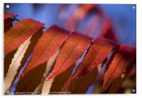 Red Leaves Blue Sky, Acrylic Print
