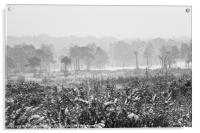 Ashdown Forest in the Snow, Acrylic Print