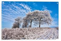 Trees in the snow, Acrylic Print