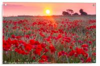 Sunrise over a sea of Poppies , Acrylic Print