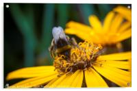 Bee on Yellow, Acrylic Print