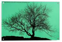 Tree In The Sky Silhouette, Acrylic Print