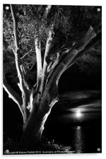 Ficus and moonlight, Acrylic Print