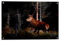 Stag in the woods, Acrylic Print