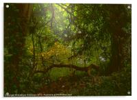 Forest Light, Acrylic Print