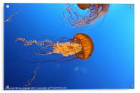 Jelly Of The Deep., Acrylic Print