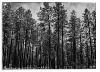 Forest Trees, Acrylic Print