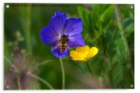 Cranesbill, buttercup and wasp, Acrylic Print