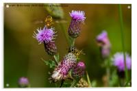 Just buzzin' about..........., Acrylic Print