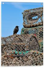 Starling and Lobster Pots, Acrylic Print