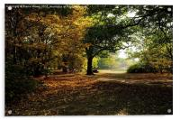 Epping Forest in Autumn, Acrylic Print