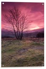 Red Sky in the Morning, Acrylic Print