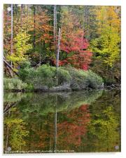 Pond Autumn Reflections, Acrylic Print