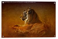 Dont Wake a Sleeping Tiger, Acrylic Print
