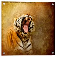 I Am Woman, Hear Me Roar, Acrylic Print