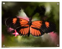 Black and Orange Butterfly, Acrylic Print