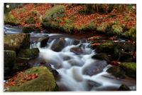 Autumn In Padley Gorge, Acrylic Print