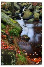 Autumn Colours in Padley Gorge, Acrylic Print